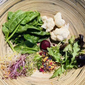 MOKYBird eenvoudige salade 01