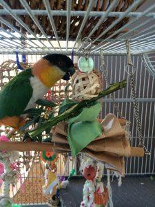 MOKYBird-foerageer-speeltjes