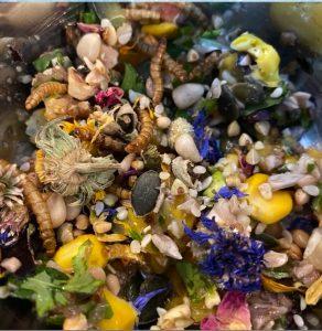 MOKYBird salade dag 7